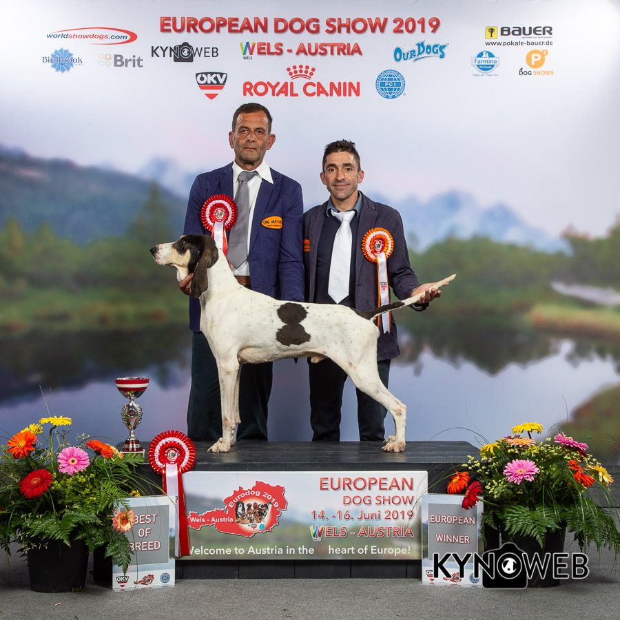 Eventi: Dog Show europeo