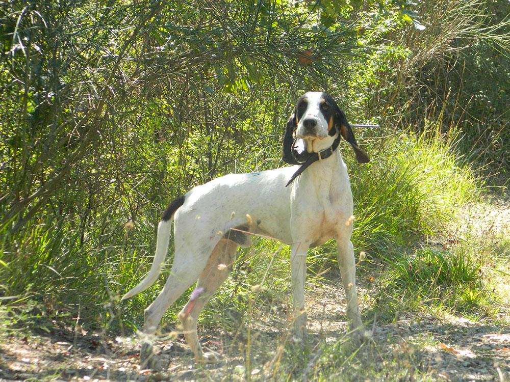Igiene del cane: La toelettatura