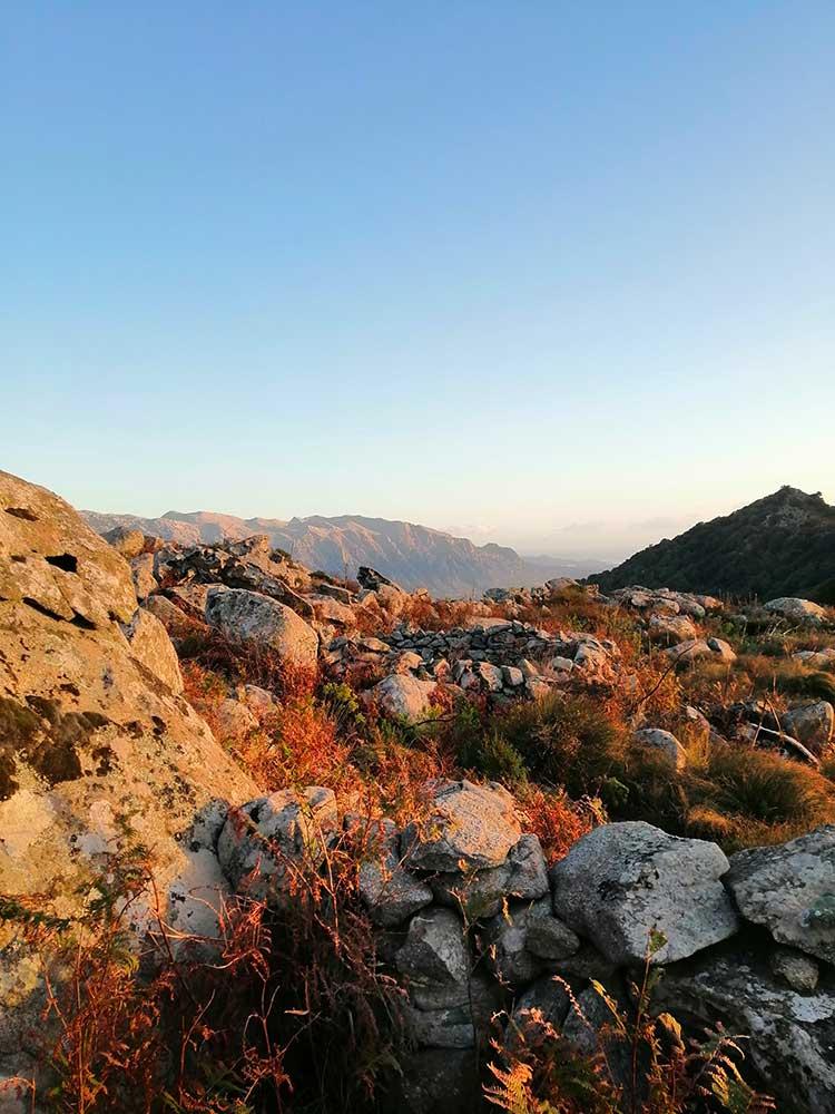 Caccia grossa in Sardegna: tra covid e Peste suina africana