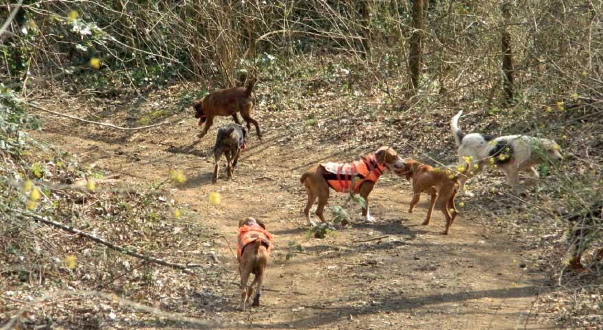 Veterinaria: I cani e il meteo